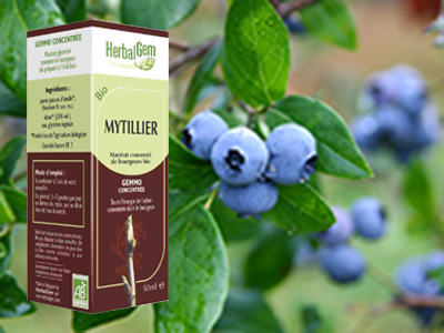 Myrtille bourgeon macerat Vaccinium myrtillus