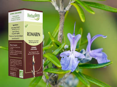romarin bourgeon macerat Rosmarinus officinalis bio